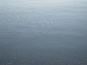 ripples by minnows